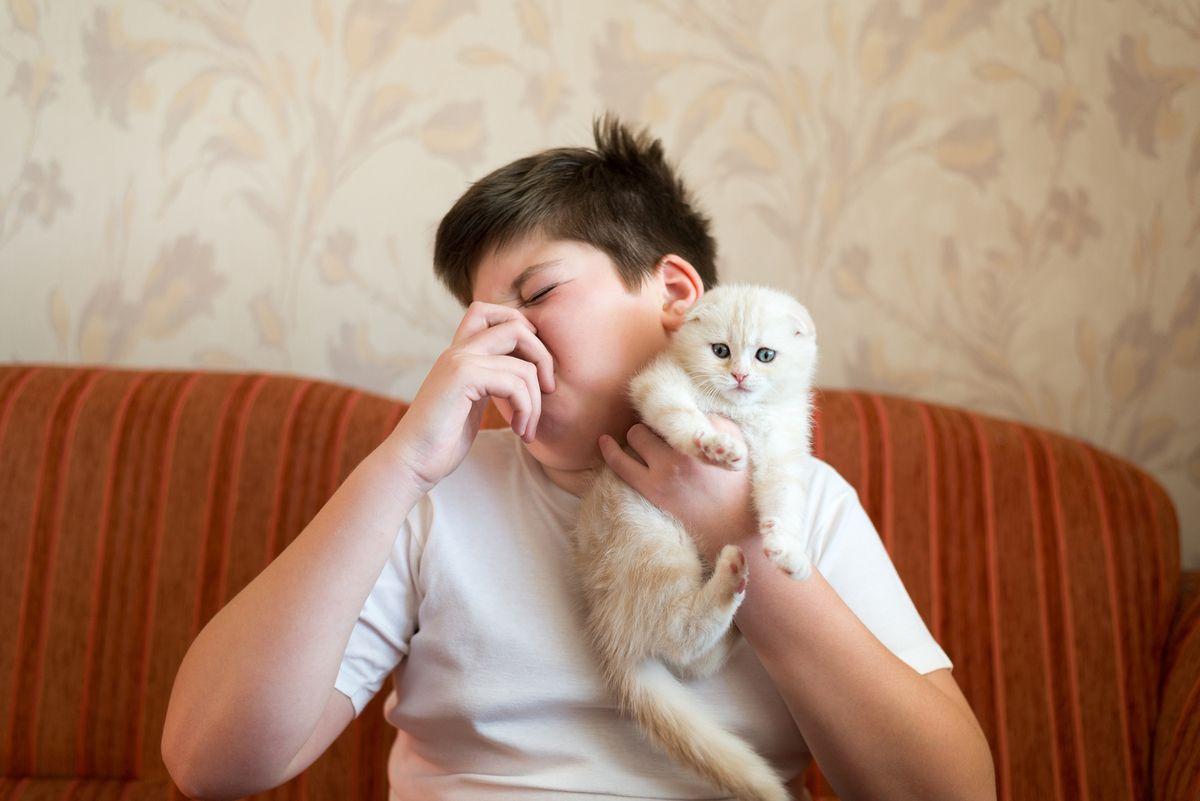 allergie-chien-chat